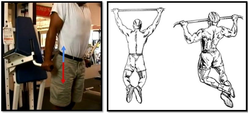 Массанаборные упражнения для нижней части трапеции