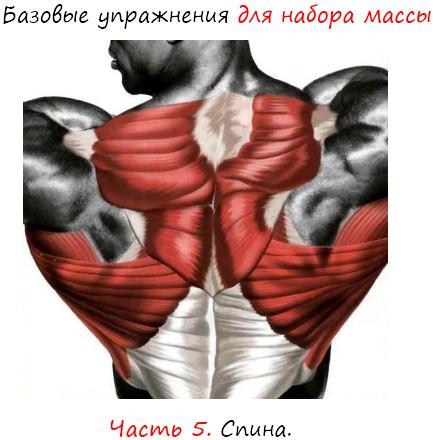 Упражнения для набора массы: спина