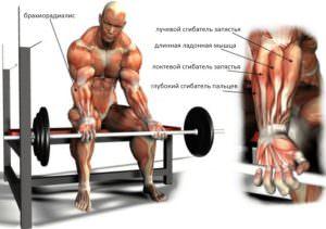 Glubokiy-sgibatel-paltsev-myishtsyi-300x211 Глубокий сСгибание запястий на нижнем блоке мышцы