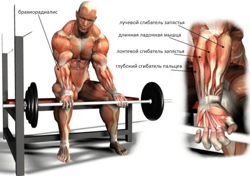 Глубокое сгибание запястий на нижнем блоке мышцы