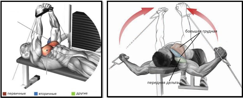 Сведение рук на нижнем блоке лежа мышцы