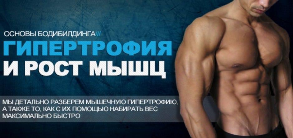 гипертрофия мышц, основы