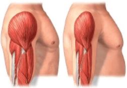 gipertrofiya-myishts Как растут мышцы? Самое полное руководство.