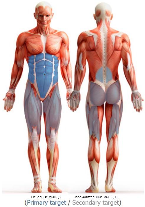 анатомический атлас упражнения планка
