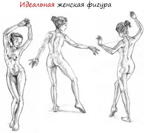 Самые сексуальные пропорции тела