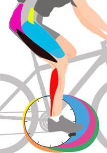 myishtsyi-v-rabote-velosiped-210x300 myishtsyi-v-rabote-velosiped