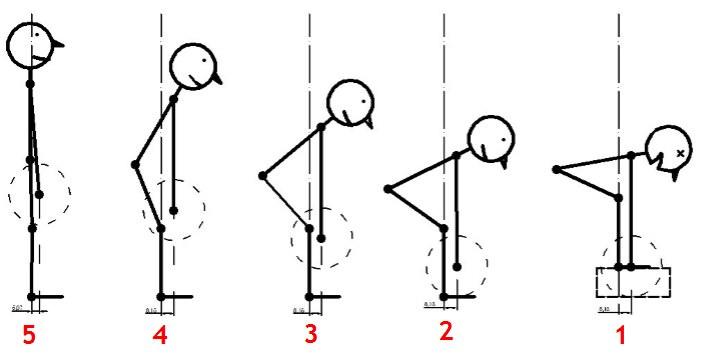 становая тяга, фазы движения