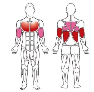 мышцы, задействуемые при подтягивании