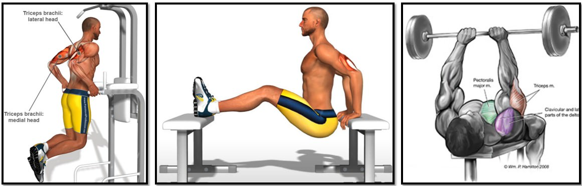 лучшие упражнения на трицепс