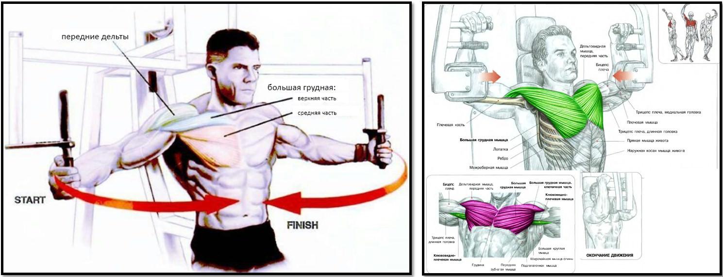 упражнение бабочка мышцы в движении