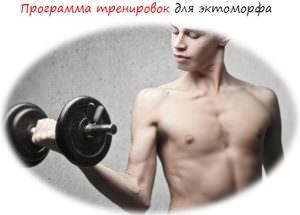 Программа тренировок для эктоморфа