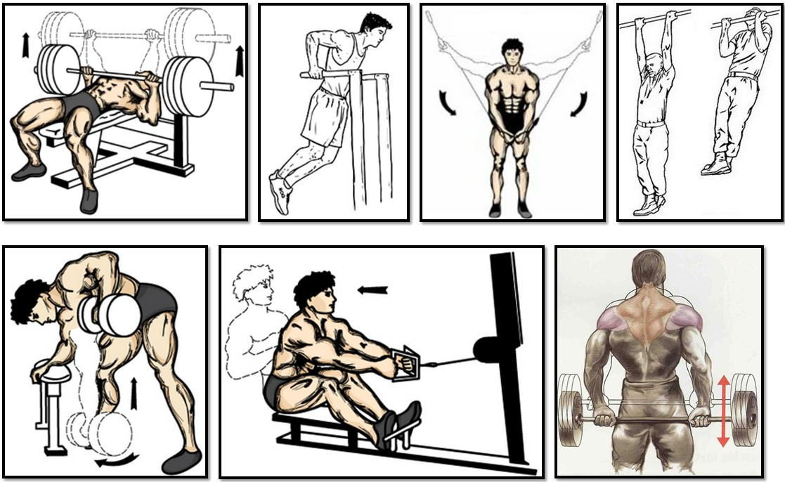 Программа тренировок для эктоморфа, упражнения грудь спина