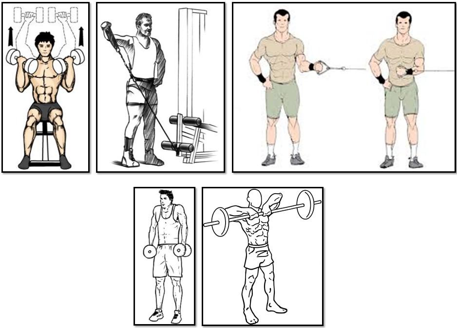 Программа тренировок для эктоморфа, упражнения плечи трапеции
