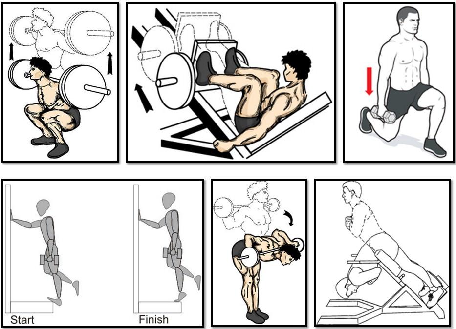 Программа тренировок для эктоморфа, упражнения ноги спина