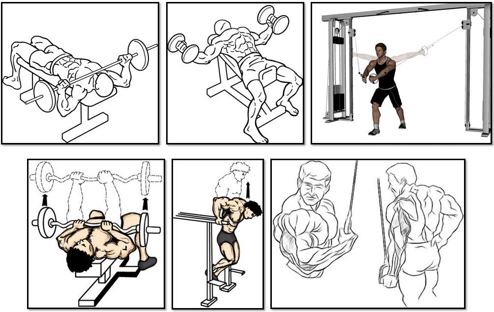 Программа тренировок для эктоморфа, упражнения грудь трицепс