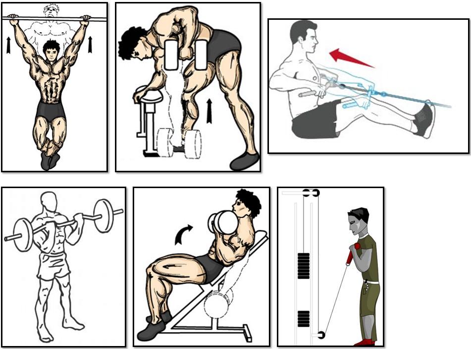 Программа тренировок для эктоморфа, упражнения спина бицепс трапеции