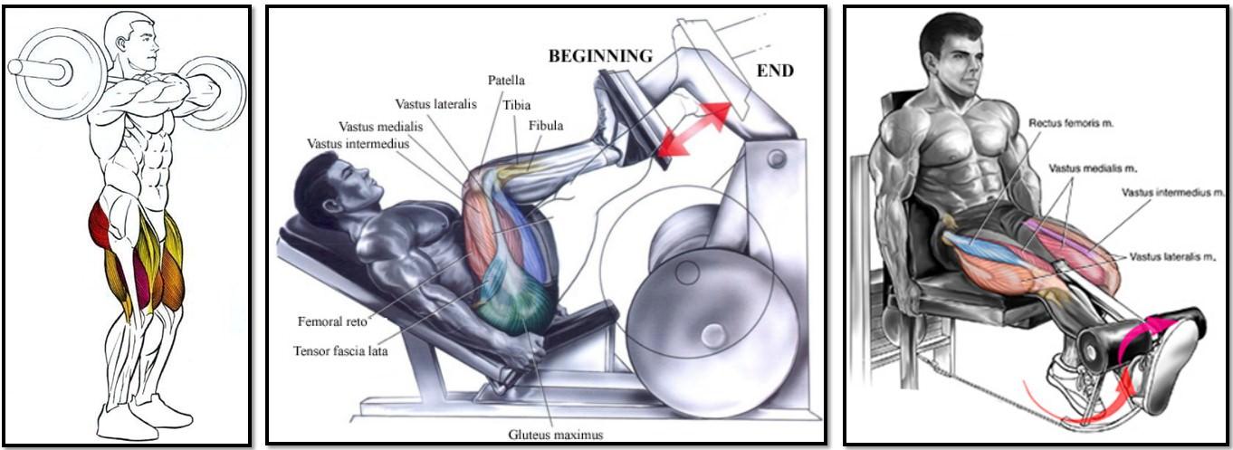 394Fv0Z Анатомия мышц ног. Качаемся правильно.