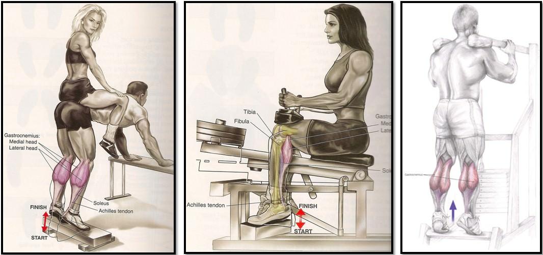 лучшие упражнения на мышцы голени