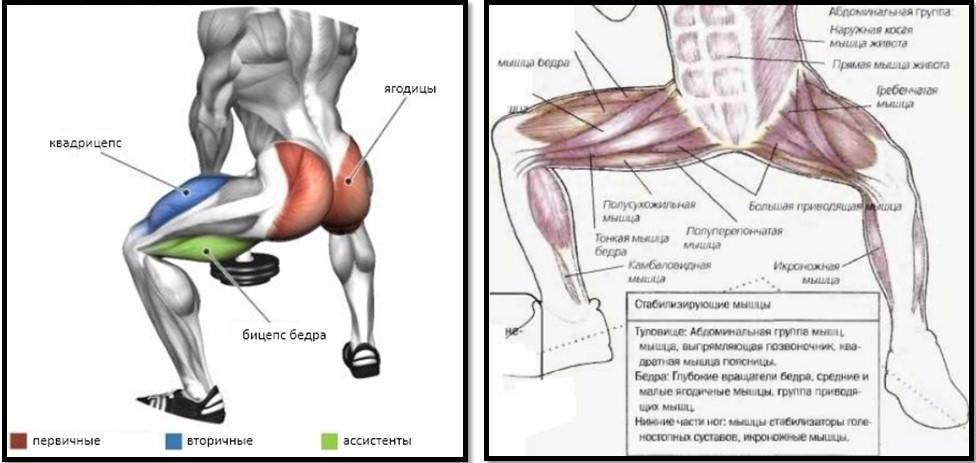 Плие приседания мышцы в работе