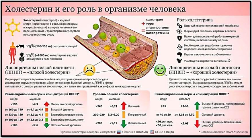 роль холестерина в организме человека