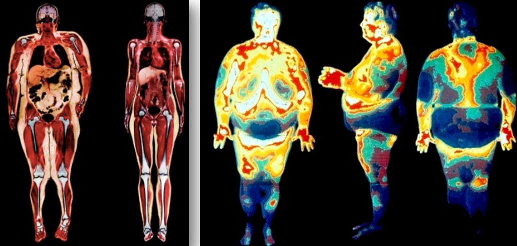На сколько можно похудеть за 2 недели бегая