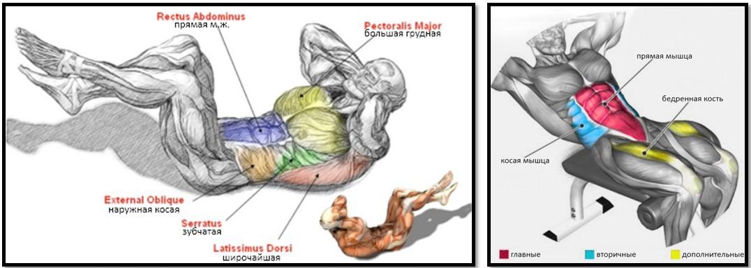 Скручивания на пресс мышцы в работе