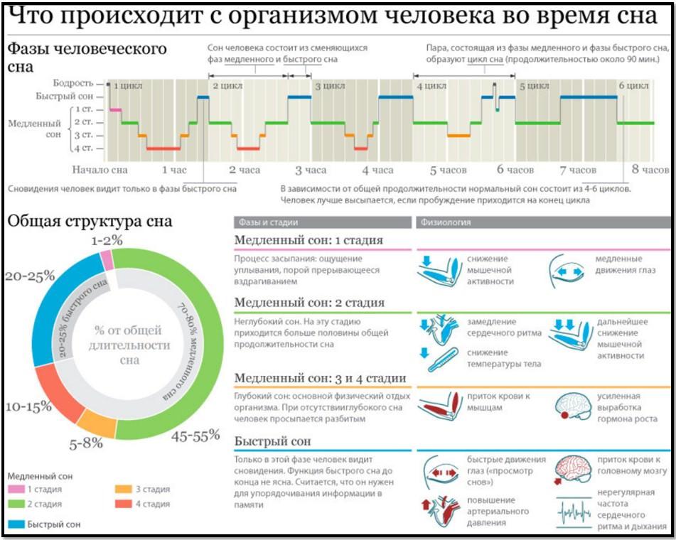 Сон инфографика