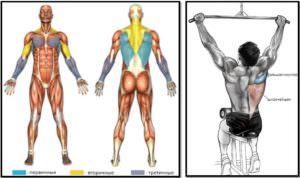 3dPKanO-300x178 Тяга верхнего блока мышцы