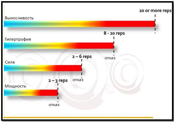 Типы мышечных волокон и количество повторений