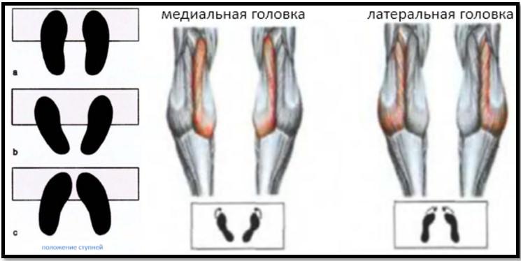 Позиция стоп при подъемах на носки и мышцы в работе