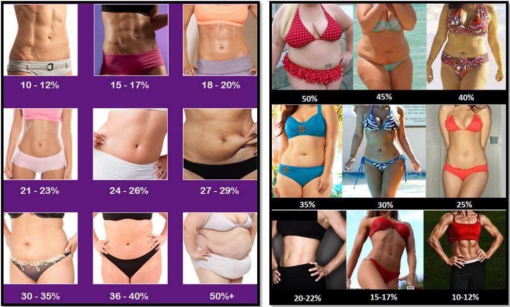 Процент жира в организме девушки