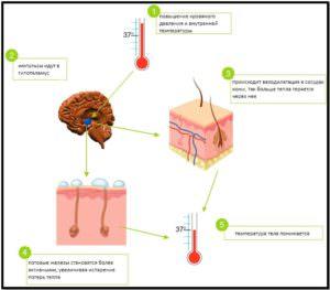 Процесс гипертермии