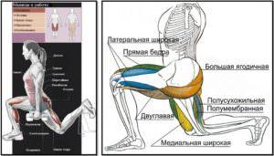 Болгарские выпады мышцы в работе