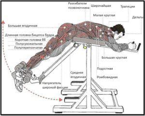 3hQbAmm-300x239 Обратная гиперэкстензия мышцы в работе