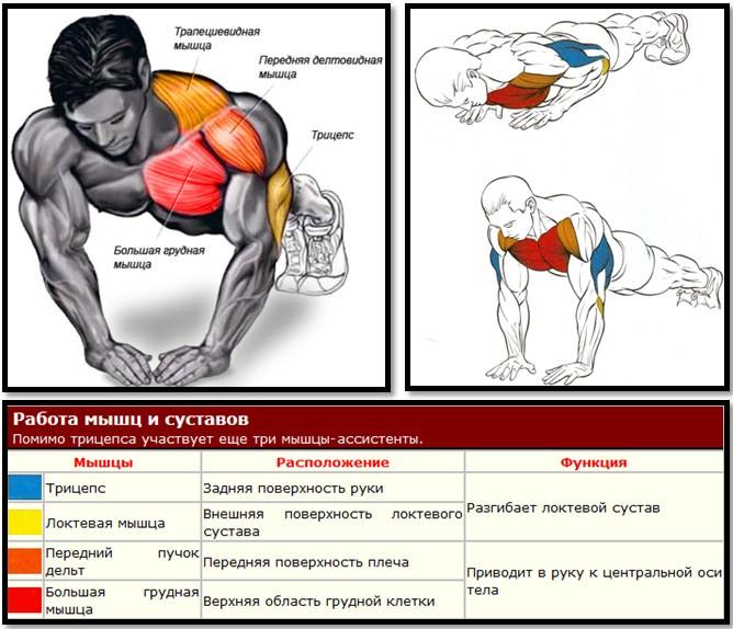 Отжимания узким хватом мышцы в работе