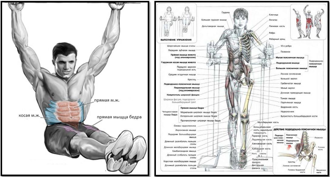 Подъемы ног в висе мышцы в работе