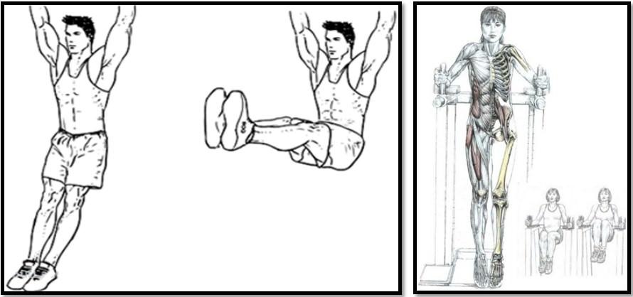 Подъемы ног в висе техника выполнения