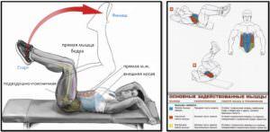 Обратные скручивания мышцы в работе