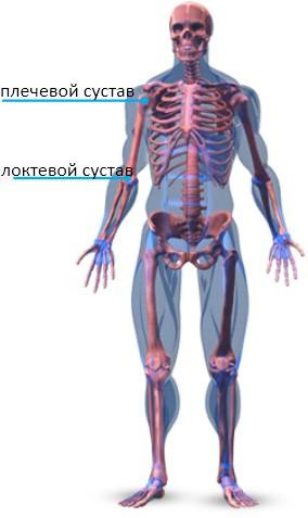 Скелетная анатомия рук
