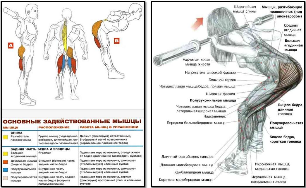 Как накачать мышцы спины позвоночника 60