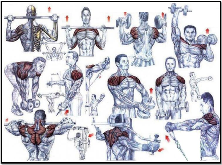 Атлас упражнений на плечи