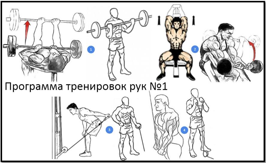 упражнения по порядку в тренажерном зале человека