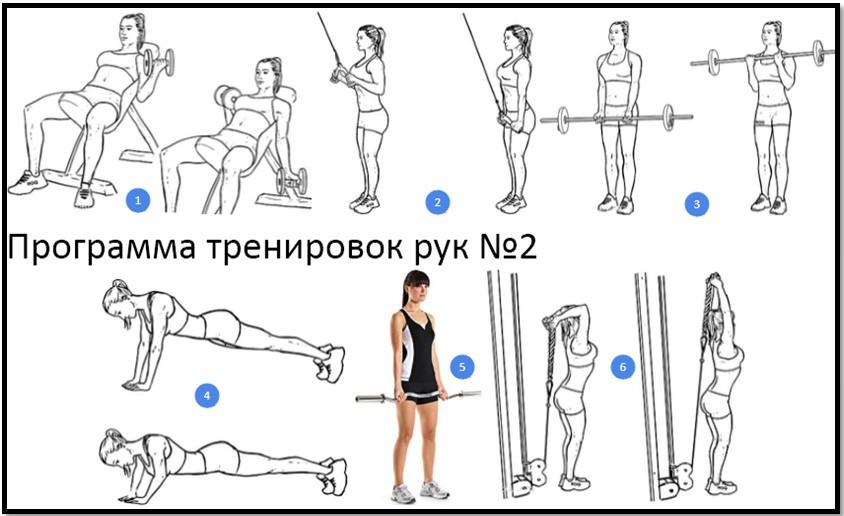 Программа тренировок рук №2 атлас упражнений