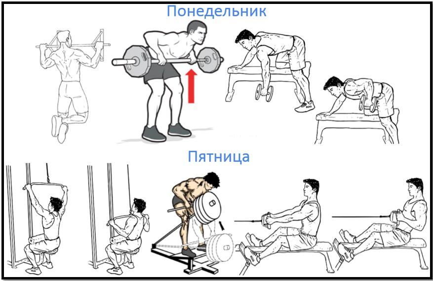 Программа тренировок спины №1 Атлас упражнений