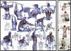 Упражнения на спину полный список
