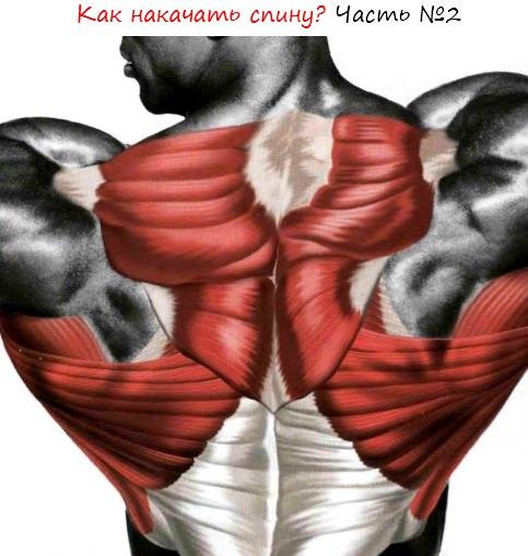 Как прокачать низ спины