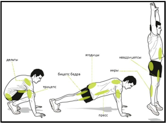 Бурпи мышцы в работе