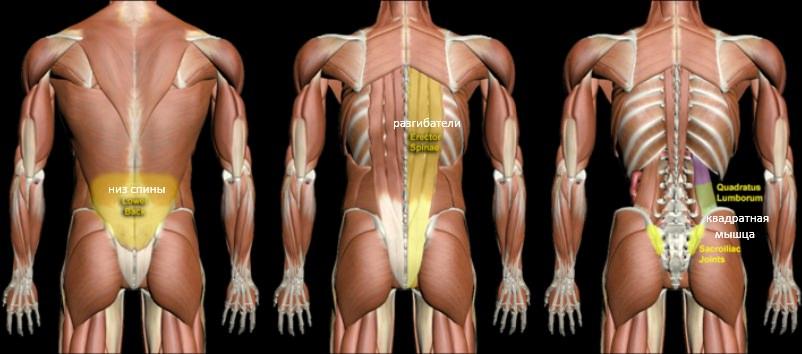 Мышцы низа спины