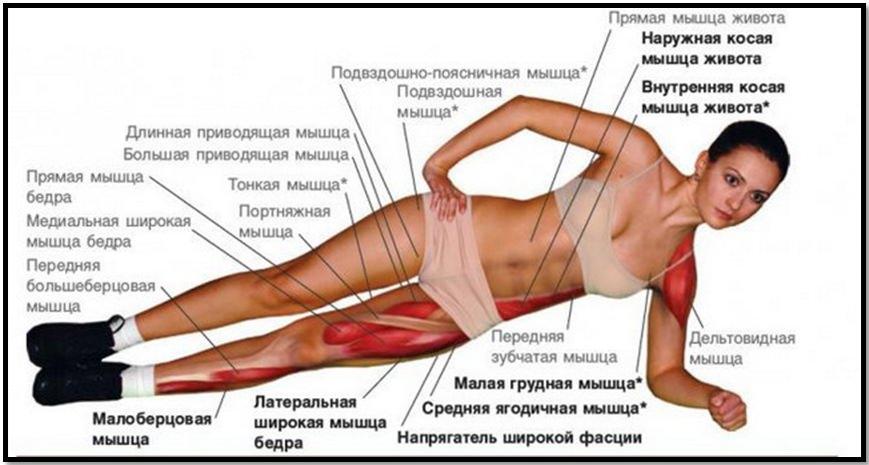 Боковая планка мышцы в работе
