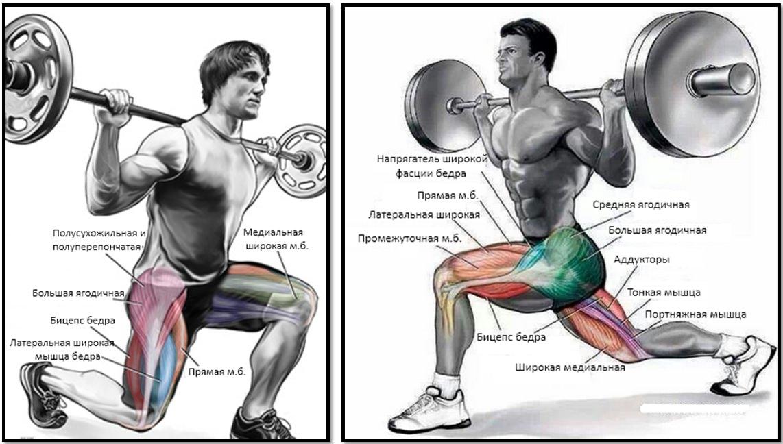Выпады со штангой атлас мышц